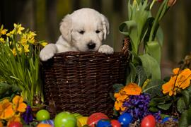Puppy in an Easter Basket