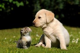 Dog and cat on the green grass