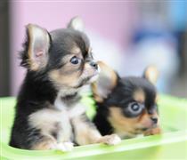 Cute Spanish dogs