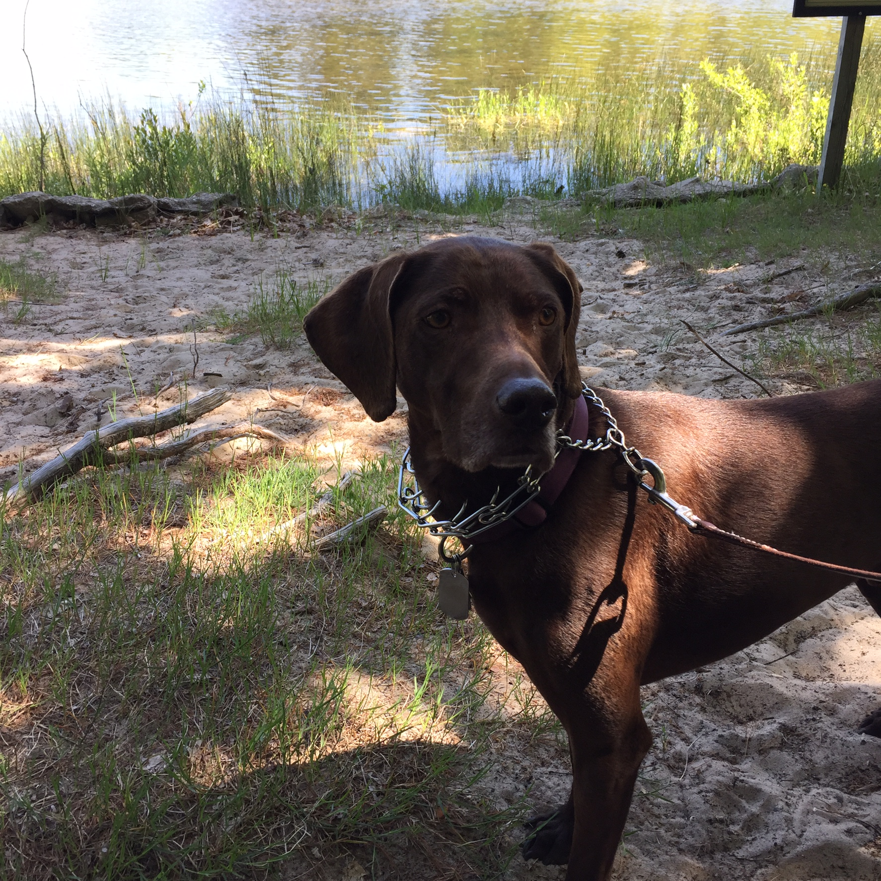 German Shorthaired Pointer Names at DogNamed.com